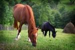 Zonnige toekomst voor paarden Edith Wiersma na noodkreet